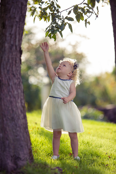 reaching for leaves